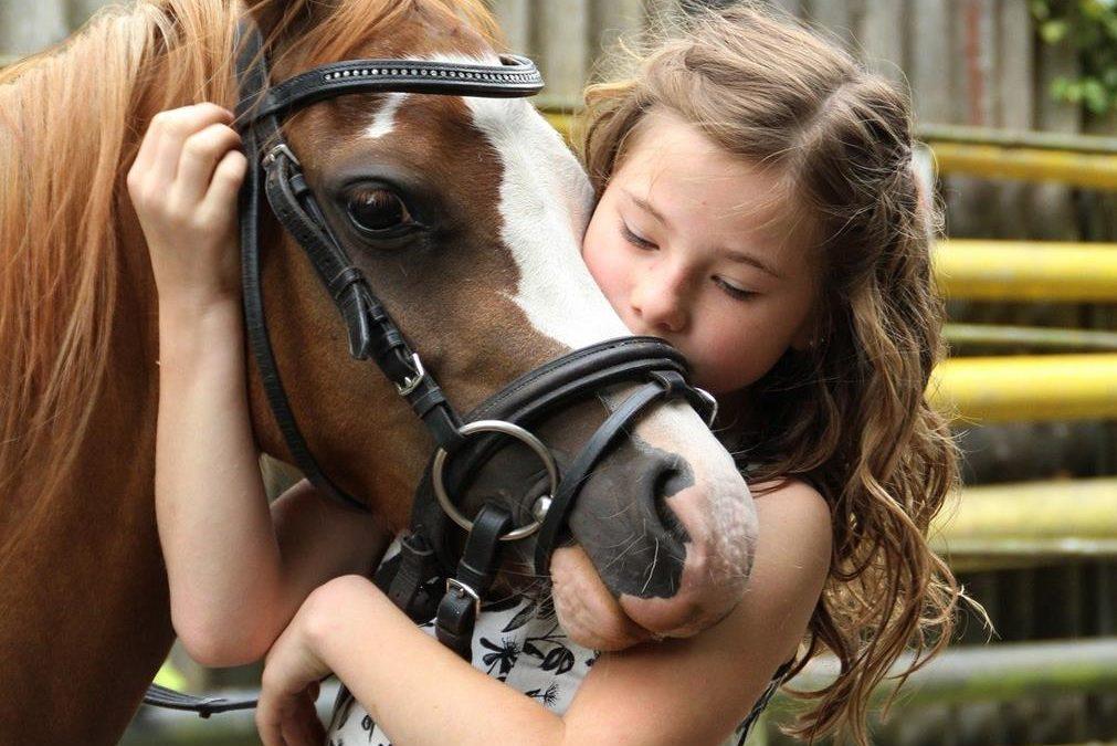 Équitation: le «sentiment de la bouche du cheval» donne au cavalier la «bonne main»