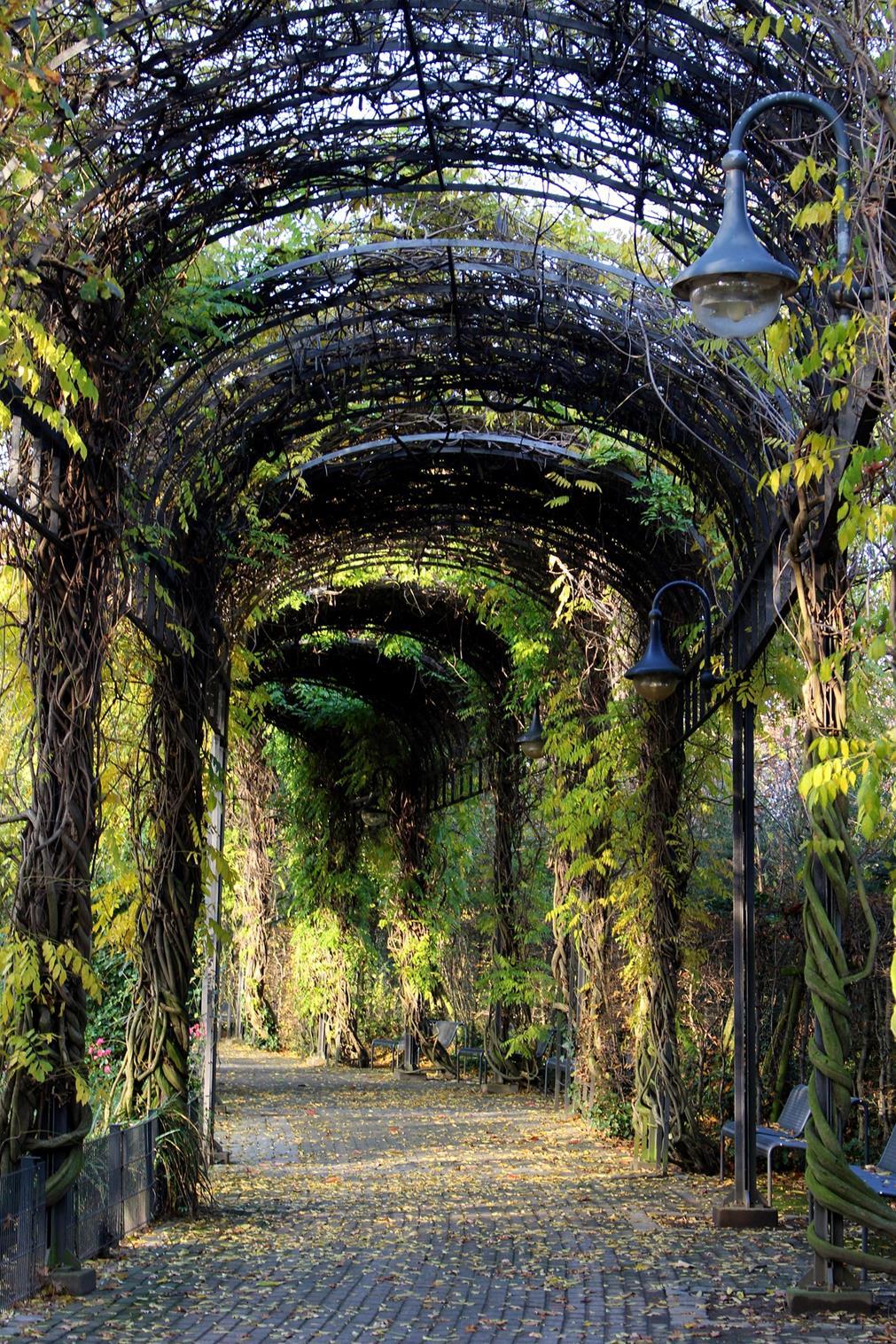 Un tunnel végétal : une enfilade d'arches de verdure couvre une rue pavée plantée de lampadaires et de bancs alternées à l'abri des arbres ; la lumière extérieure est filtrée par les feuillages